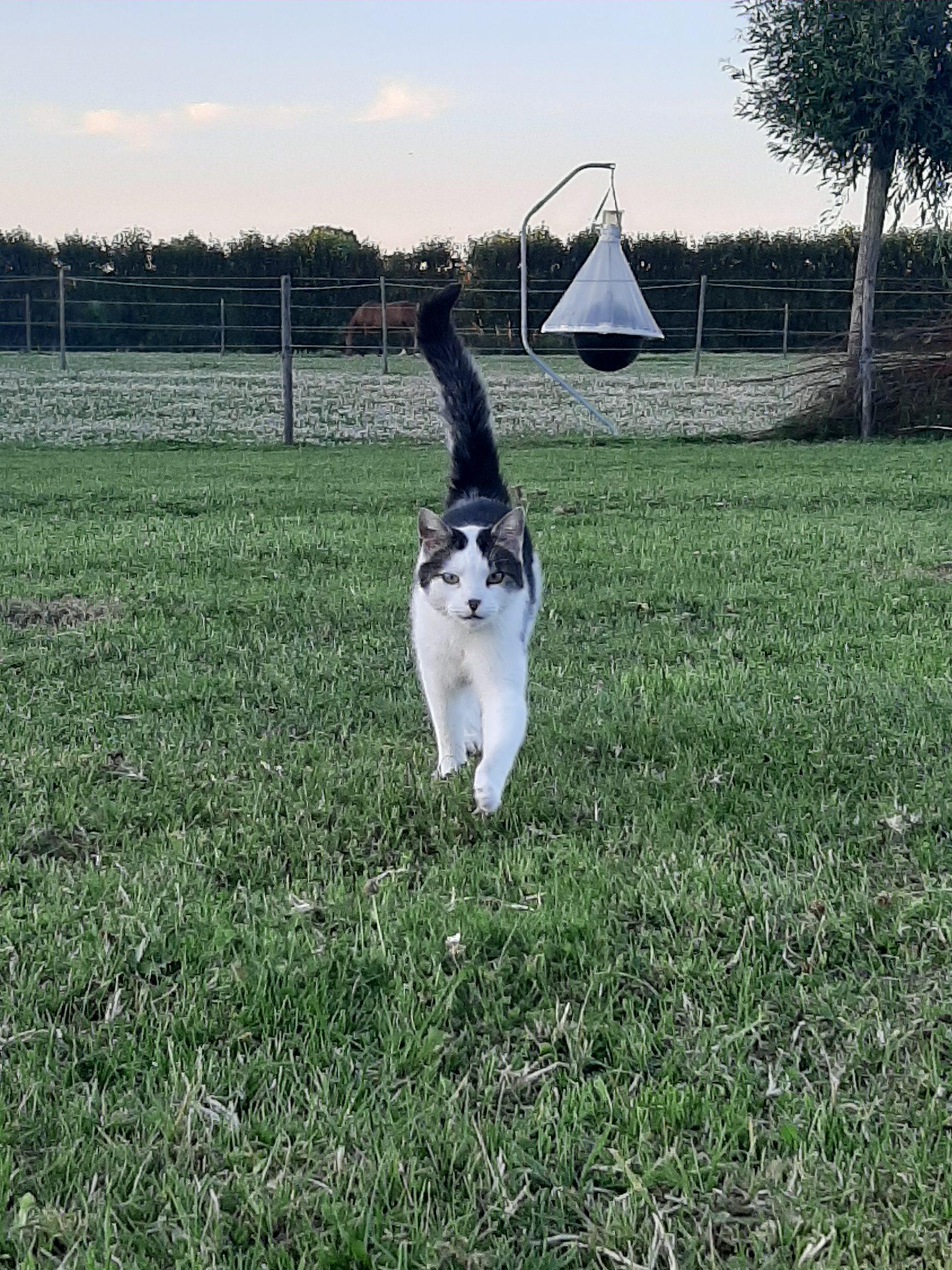 Stal-Schouten-Kat-Paarden-dieren