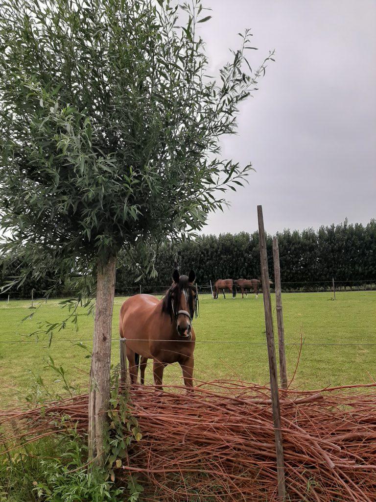 Agenda-Stal-Schouten-Activiteiten-Ponykamp-Wemeldinge