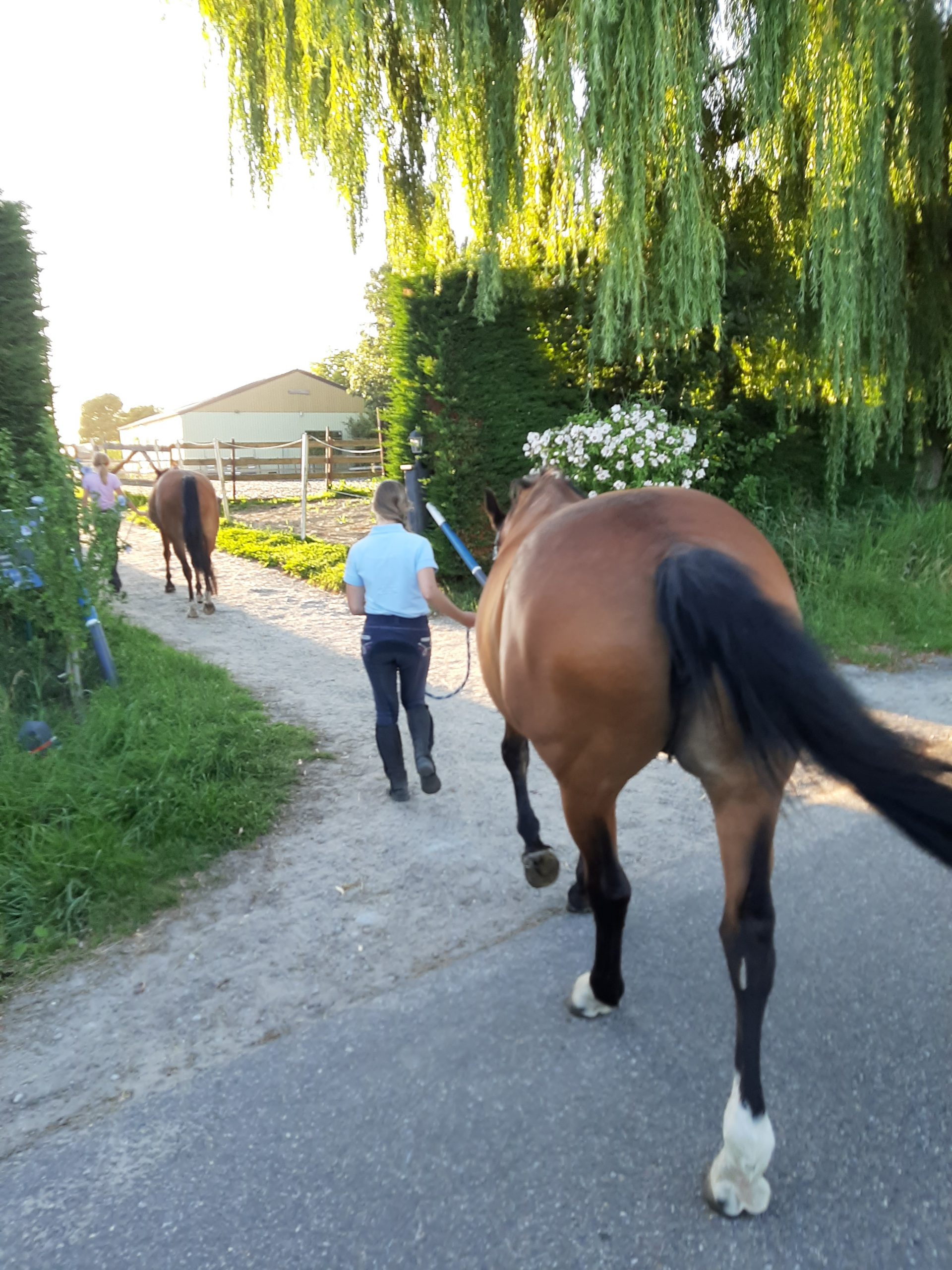 Stal-Schouten-Ponykamp-Ponydagkamp