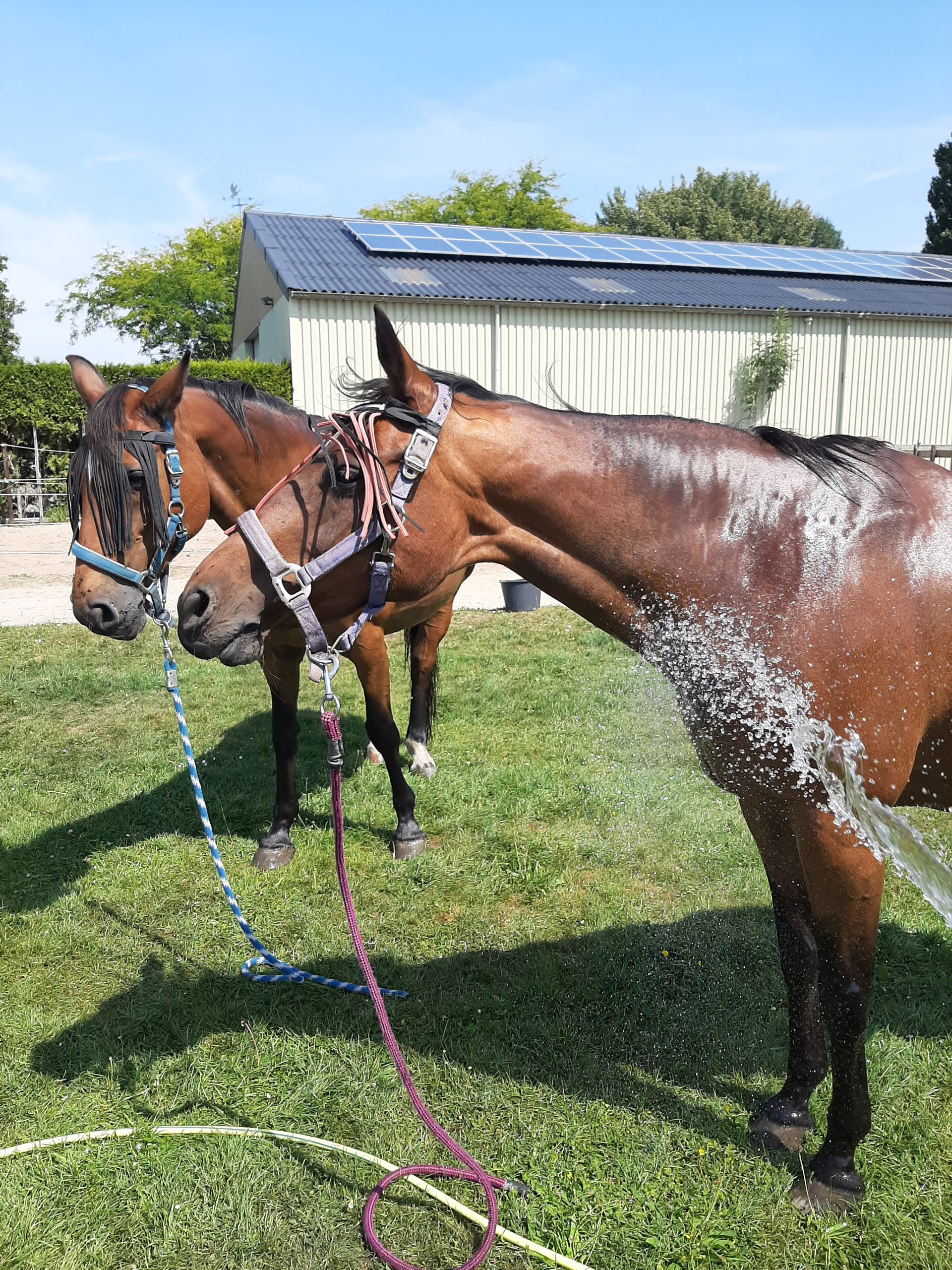 Paarden-Stal-Schouten-Ponydagkamp-Ponykamp-pony