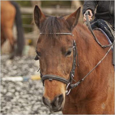 Boy-Paarden-Manege-Team-Stal-Schouten