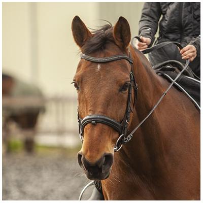 Delight-paard-paardrijden-lessen-Stal-Schouten