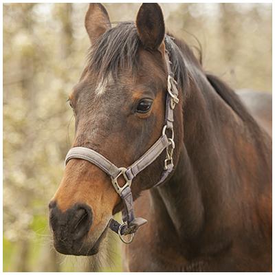 Firenze-paard-Stal-Schouten-team-over-ons