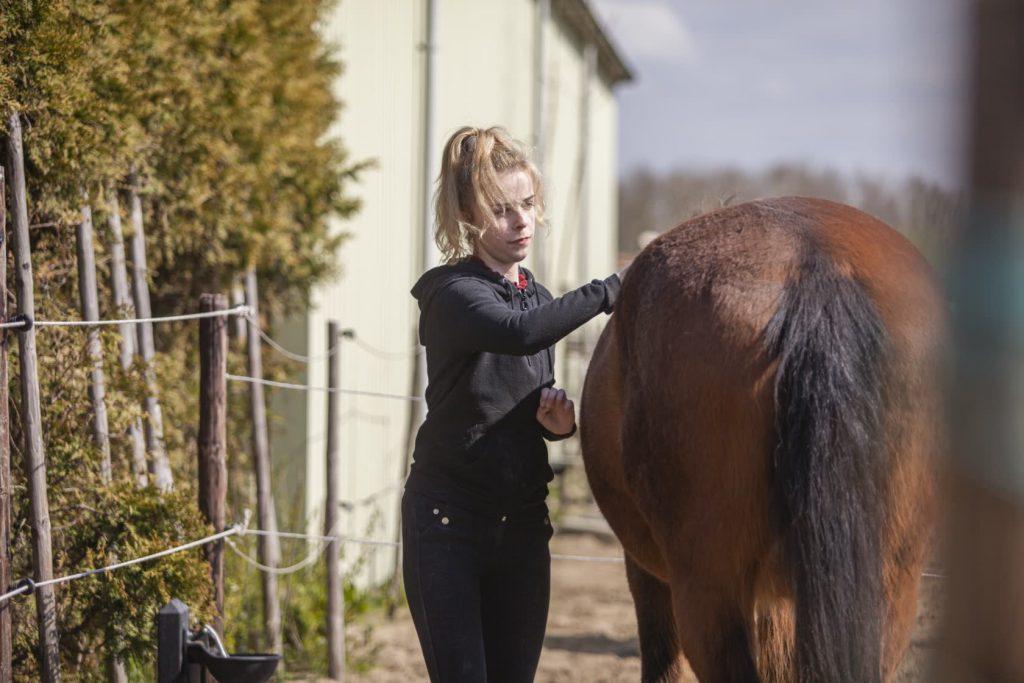 Stage-lopen-Stal-Schouten-Stagiaire-Wemeldinge-paarderhouderij-dierenverzorging