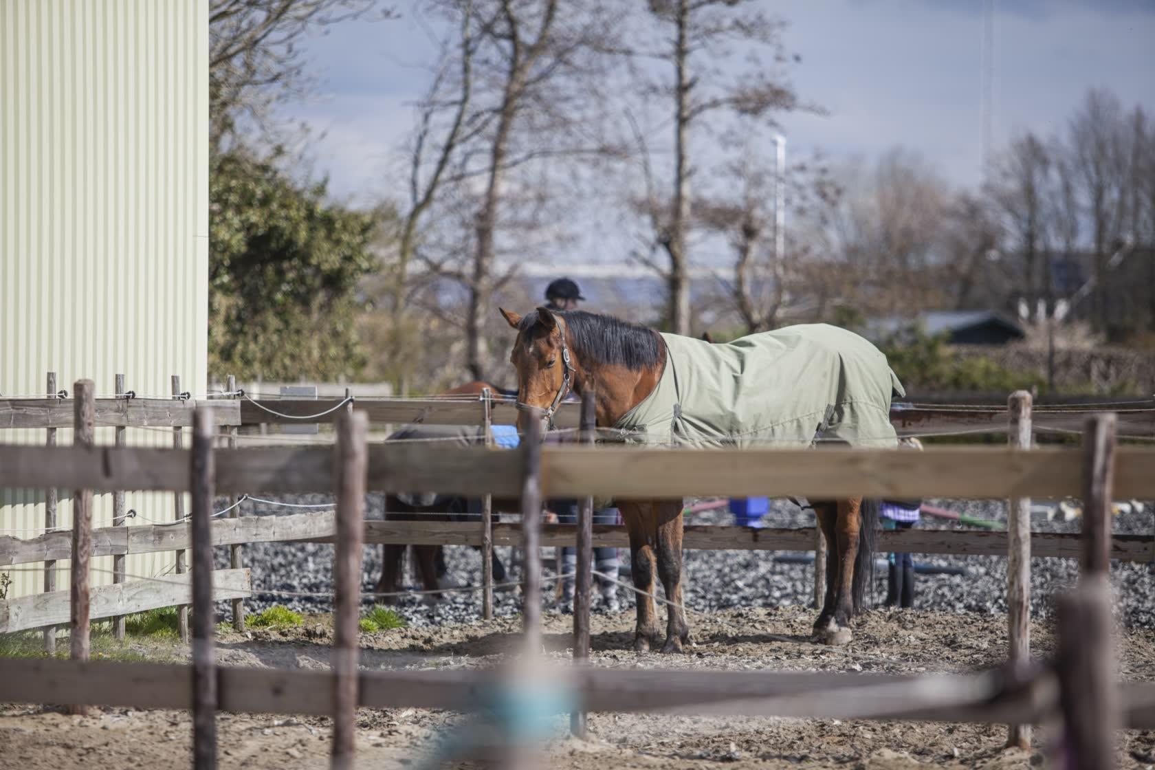 Paarden-stage-lopen-wei-Stal-Schouten-pony