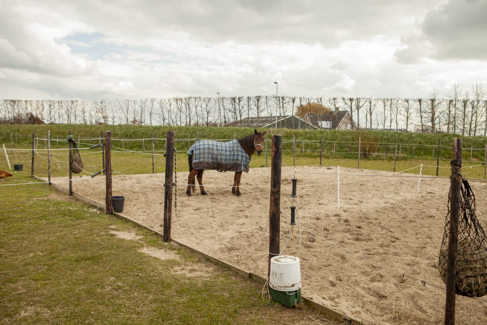 Paarden-Wei-Stal-Schouten-Paarden_Pony