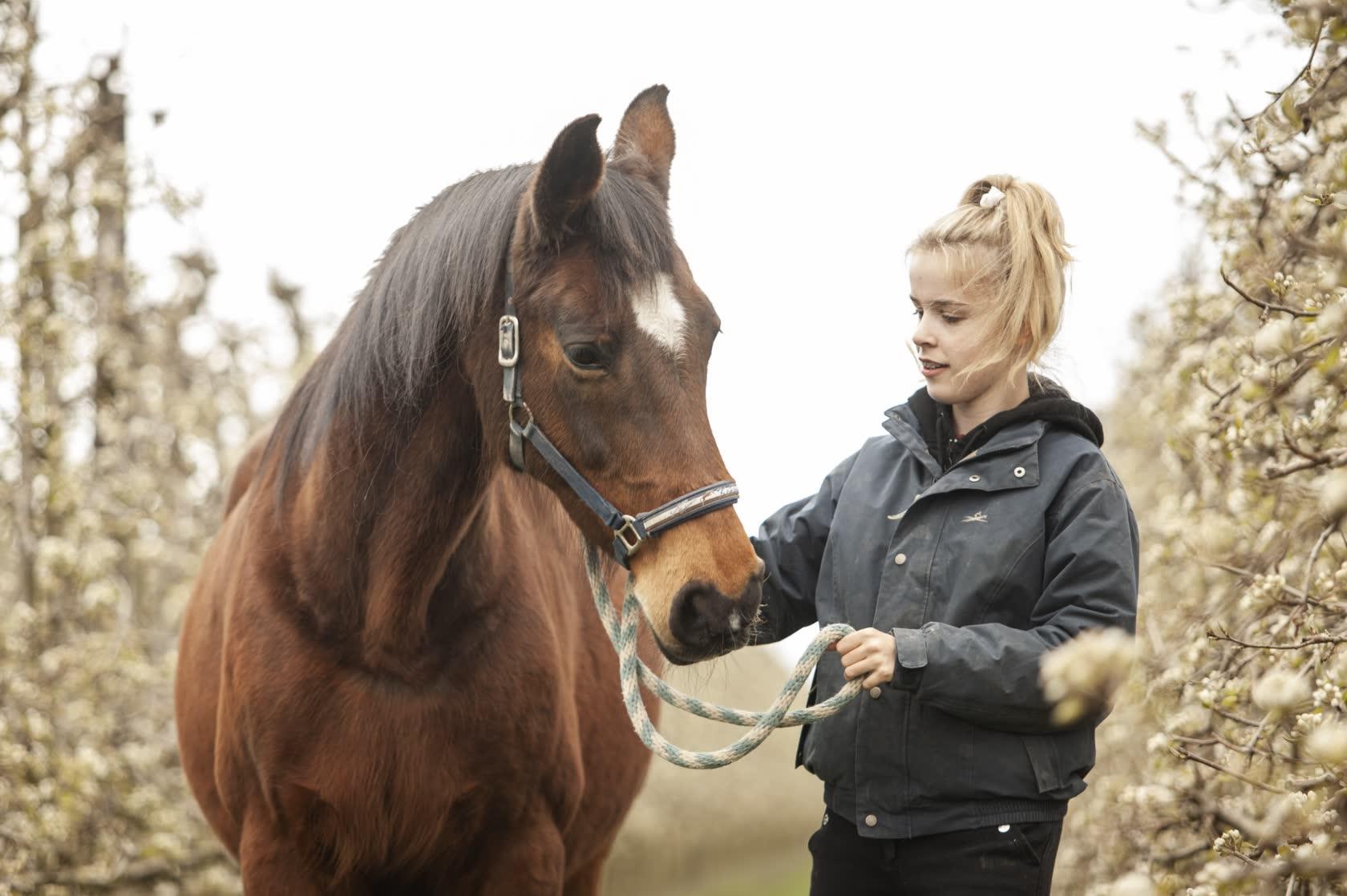 Paarden-Pony-Stal-Schouten-Stage-Lopen-meewerken-opleiding
