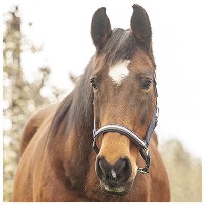Miami-paarden-rijlessen-pony-stal-manege-schouten