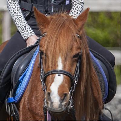 Moony-paard-Stal-Schouten-Team-over-ons